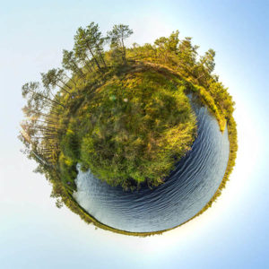 Сферические панорамы 360 Болото Мох